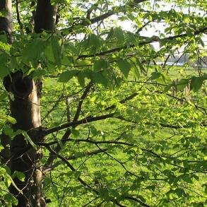 leafy-surroundings